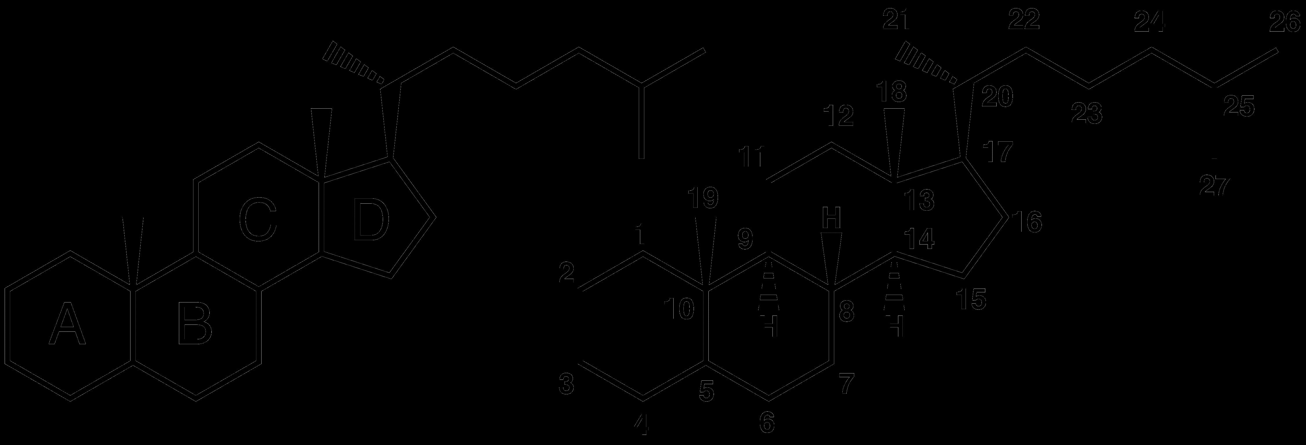 动物体内的甾类物质(常见结构)图